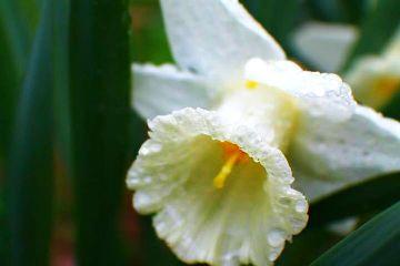bokeh flower nature rain hellospring