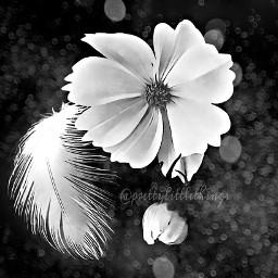 photography black & white bokeh quotes emotions