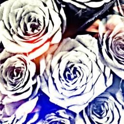 roses flower mask nature hdr
