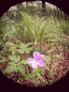 flower fisheye forest nature photography