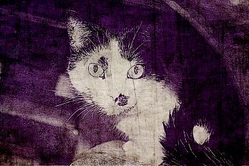 pets & animals cute cat colorful vintage