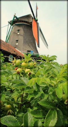 holland netherland travel photography windmill