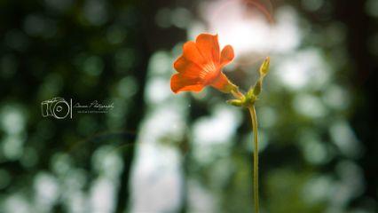 photography nature macro flower