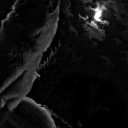 moon dark cutecat