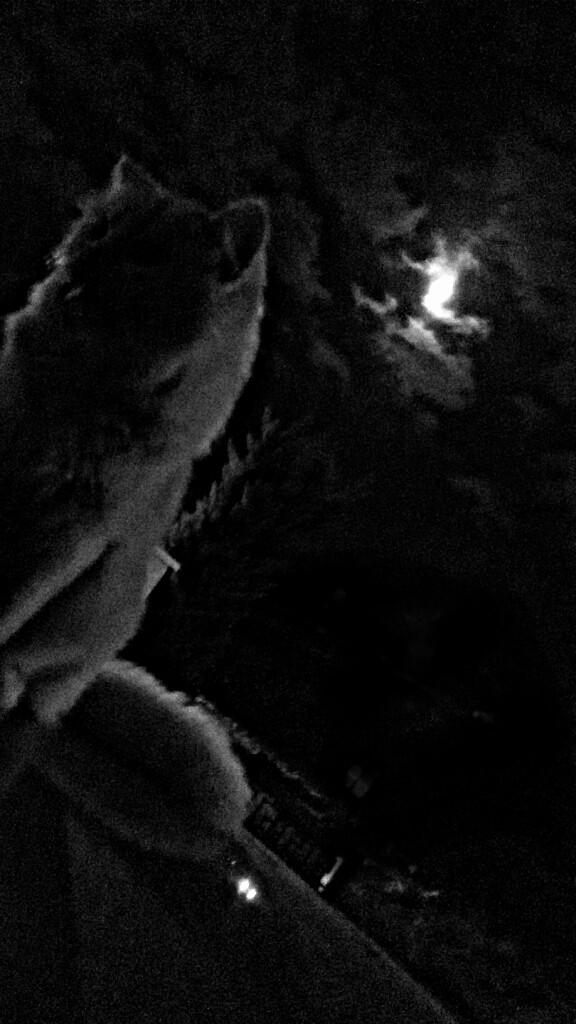 my romantic cat #moon #dark #cutecat 😻💙