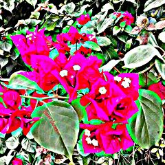 flower colorful nature hdr