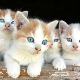 freetoedit cute catslover babycats remixme