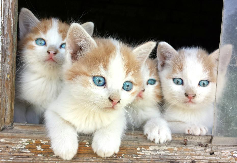Cute Cats #FreeToEdit #cute #catslover #babycats #remixme #remixit #animalsandpets #animallove #pets&animals