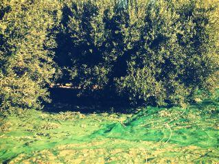 diariofotografico nature pueblo rural agriculture