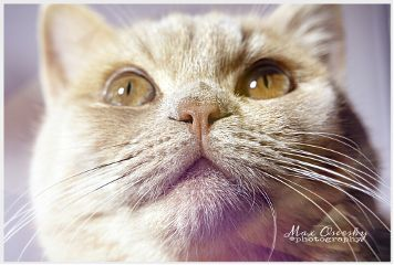 cat cute animals photography portrait