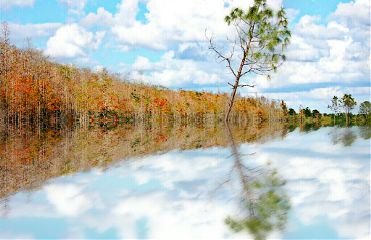 reflection nature autumn swamp
