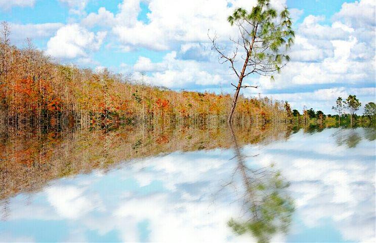 reflection nature autumn swamp