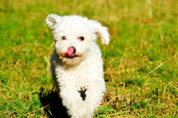 winter dog petsandanimals love run