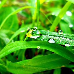 nature rain photography grass dews