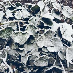 winter snow nature emotions flower